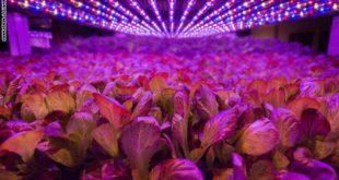 نباتات بلا ضوء