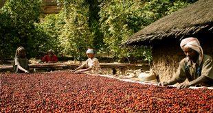 ethiopia-coffee