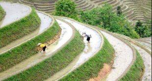 ارز الصين الجديد