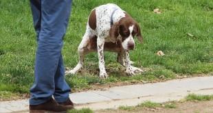 BARCELONA14 03 2016 Sociedad Perros defecando en el parque del CCCB   FOTO de RICARD CUGAT