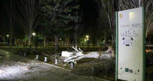 tronco-del-arbol-caido-salou-ayer-causa-del-viento-1486330181009