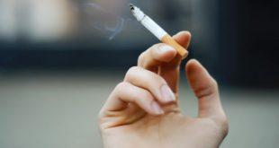 nicotin level