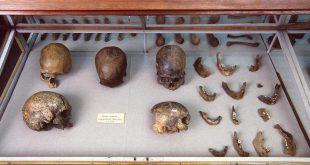 american-skulls