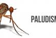 banierepaludisme-1
