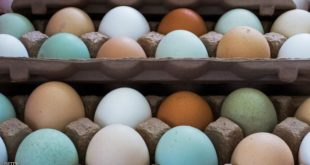 Natural eggs from chickens are seen for sale at a local Farmers Market in Annandale, Virginia, August 8, 2013. Different chickens lay different colored eggs.      AFP Photo/Paul J. Richards        (Photo credit should read PAUL J. RICHARDS/AFP/Getty Images)