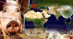 African-swine-fever-spread-map-877316
