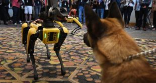 Kedy the Security K9 meets robotic dogs called Spot and built by Boston Dynamics during the Amazon Re:MARS conference on robotics and artificial intelligence at the Aria Hotel in Las Vegas, Nevada on June 4, 2019. (Photo by Mark RALSTON / AFP)